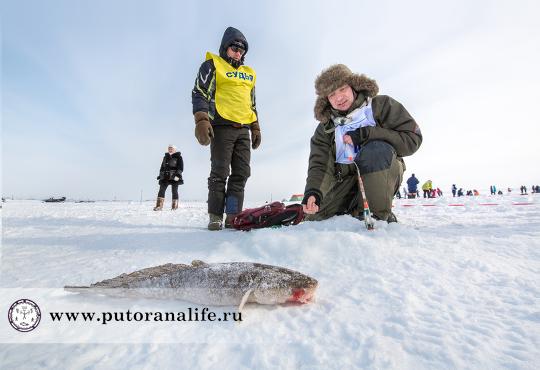 Северная рыба моей мечты